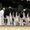 Royal16_Holstein_L32A3977