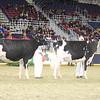 Royal16_Holstein_21M9A0196