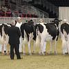 Royal16_Holstein_21M9A0099