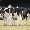Royal16_Holstein_L32A3885