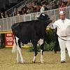 Royal16_Holstein_1M9A9985