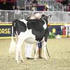 Royal16_Holstein_21M9A0182