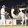 Royal16_Holstein_L32A4144