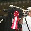 Royal16_Holstein_L32A4057