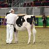 Royal16_Holstein_L32A4150