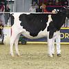 Royal16_Holstein_L32A4082