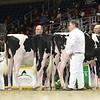 Royal16_Holstein_L32A4103