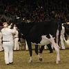 Royal16_Holstein_21M9A0016