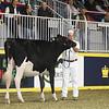 Royal16_Holstein_1M9A9948