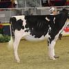 Royal16_Holstein_21M9A0345
