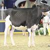 Royal16_Holstein_L32A4028