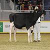Royal16_Holstein_21M9A0324