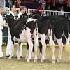 Royal16_Holstein_L32A4090