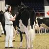 Royal16_Holstein_1M9A9933