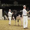 Royal16_Holstein_1M9A9932