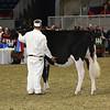 Royal16_Holstein_L32A4169