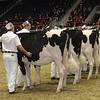 Royal16_Holstein_21M9A0091