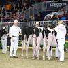 Royal16_Holstein_L32A4085
