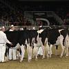 Royal16_Holstein_21M9A0031