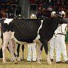 Royal16_Holstein_1M9A9989