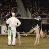 Royal16_Holstein_21M9A0054