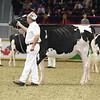 Royal16_Holstein_L32A4046