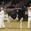 Royal16_Holstein_1M9A9988