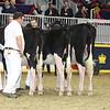 Royal16_Holstein_L32A4088