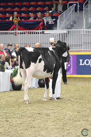 RWF Holstein Yearlings 2016