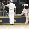 Royal16_Holstein_L32A4145