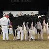 Royal16_Holstein_L32A4176