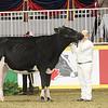 Royal16_Holstein_1M9A9952