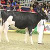 Royal16_Holstein_21M9A0194