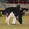 Royal16_Holstein_21M9A0340