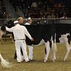 Royal16_Holstein_21M9A0027