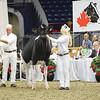 Royal16_Holstein_L32A3901