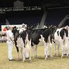 Royal16_Holstein_21M9A0095