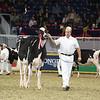 Royal16_Holstein_L32A4069
