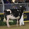 Royal16_Holstein_21M9A0062