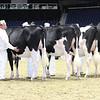 Royal16_Holstein_L32A3969