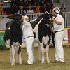 Royal16_Holstein_21M9A0279