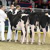 Royal16_Holstein_L32A4091