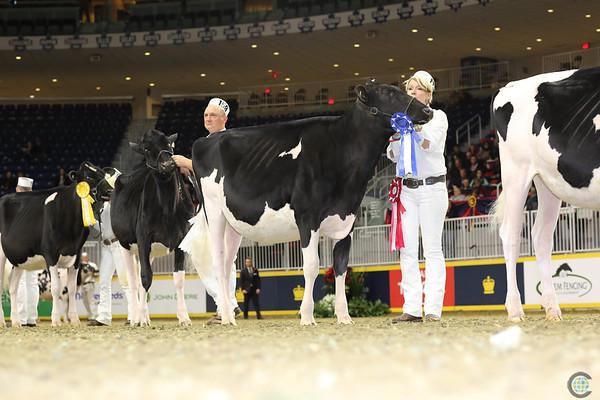 Royal16_Holstein_L32A3937