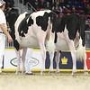 Royal16_Holstein_L32A4122