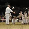 Royal16_Holstein_21M9A0129