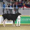 Royal16_Holstein_1M9A9946
