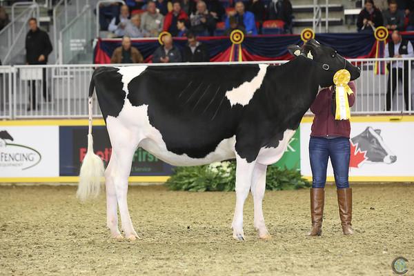 Royal16_Holstein_L32A4083