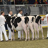 Royal16_Holstein_21M9A0220