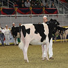 Royal16_Holstein_21M9A0327