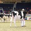 Royal16_Holstein_L32A3920